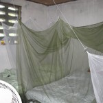 Beds protected by mosquito netting